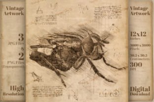 Print on Demand: Vintage Housefly Da Vinci Drawing Style Graphic Illustrations By Vintage 12by12