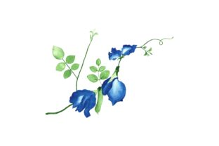 Print on Demand: Watercolor Blue Better Fly Pea Flower Graphic Illustrations By AmitDebnath