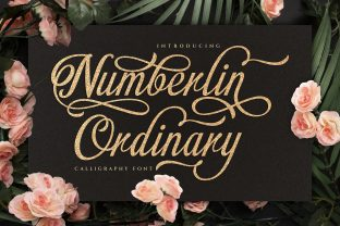 Print on Demand: Numberlin Ordinary Script & Handwritten Font By Graphicxell