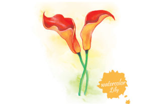 Watercolor Lily Flower Graphic Graphic Templates By naemislamcmt