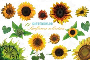 Print on Demand: Sunflower Watercolour Decor Clipart Pack Graphic Print Templates By CreartGraphics