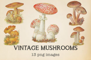 Print on Demand: Vintage Mushrooms Clipart Graphic Objects By northseastudio