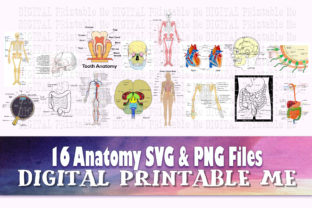 Print on Demand: Anatomy 16 Images, Clip Art Pack Graphic Teaching Materials By DigitalPrintableMe