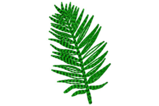 Fern Branch Single Flowers & Plants Embroidery Design By designsbymira