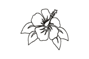 Hibiscus Outline Outline Flowers Embroidery Design By designsbymira