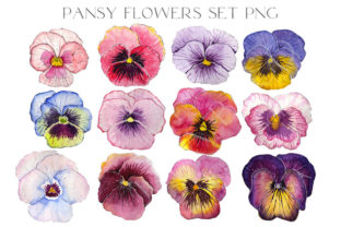 12 Watercolor Pansy Flower Buds PNG Graphic Illustrations By Julia Bogdan