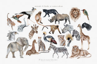 Wild Animals of Africa Illustrations PNG - 2