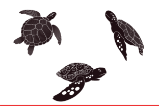 Print on Demand: Sea Turtle Graphic Illustrations By Sofiamastery