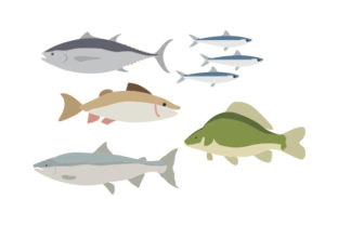 Fish Varieties Animals Craft Cut File By Creative Fabrica Crafts 1