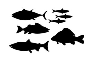 Fish Varieties Animals Craft Cut File By Creative Fabrica Crafts 2