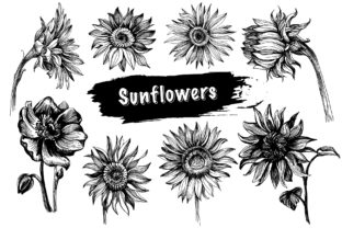 Print on Demand: Sunflower Bundle Graphic Illustrations By OrnamentStock