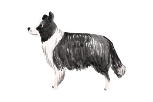 Border Collie Watercolor Dogs Craft Cut File By Creative Fabrica Crafts