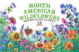 North American Wildflowers Graphic Illustrations By rembrantd.ulya