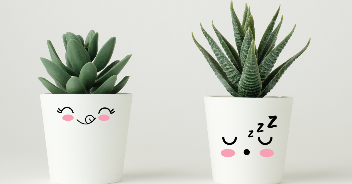 Make These Cute DIY Place Face Pot Decals For Plant Pots