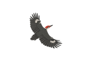 Pileated Woodpecker Birds Embroidery Design By Wingsical Whims Designs