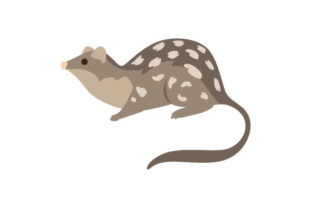 Northern Quoll Australia Craft Cut File By Creative Fabrica Crafts