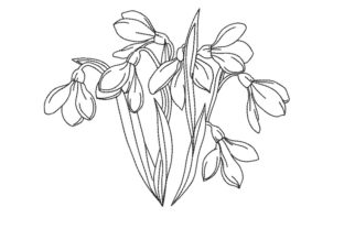 Print on Demand: Snowdrop Flowers Bouquets & Bunches Embroidery Design By ArtEMByNatali