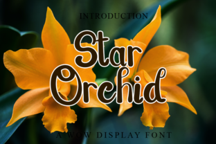 Print on Demand: Star Orchid Script & Handwritten Font By LetterPack 1