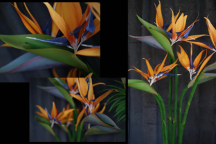 How to Make Large Paper Birds of Paradise Stalks Classes By Deaney Weaney Blooms