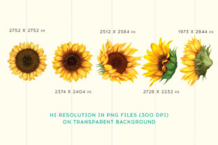 Print on Demand: Sunflower Watercolor Painting Graphic Illustrations By nesdigiart 2