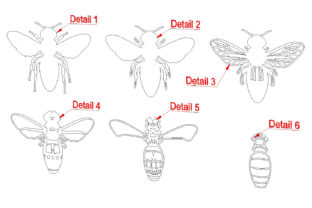 3d Layered Queen Bee SVG, Dxf Cut Files. Graphic 3D SVG By SteiDigital 9