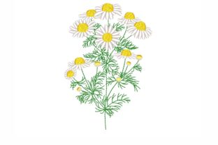 Daisy Single Flowers & Plants Embroidery Design By NinoEmbroidery