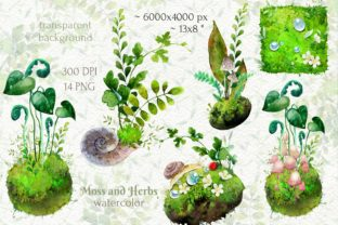 Watercolor Cliparts of Forest Moss, Herb - 2