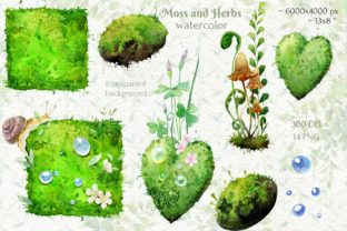 Watercolor Cliparts of Forest Moss, Herb - 3