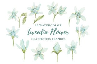 Print on Demand: 10 Watercolor Tweedia Flower Graphic Graphic Templates By Ian Mikraz