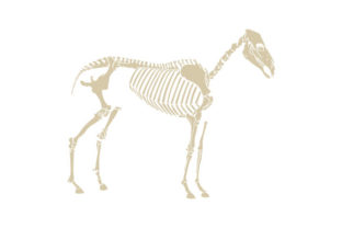 Horse Skeleton Animals Craft Cut File By Creative Fabrica Crafts