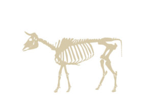 Cow Skeleton Animals Craft Cut File By Creative Fabrica Crafts