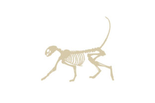 Cat Skeleton Animals Craft Cut File By Creative Fabrica Crafts
