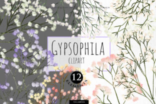 Print on Demand: Gypsophila Clipart Graphic Illustrations By HappyWatercolorShop