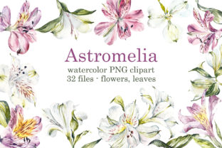 Watercolor Pink and White Astromelias Graphic Objects By Мария Кутузова