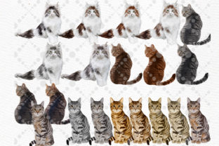 Print on Demand: Cats Clipart Cat Breeds Cat Bundle Graphic Illustrations By LeCoqDesign 3