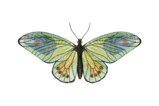 Print on Demand: Graceful Green Butterfly Bugs & Insects Embroidery Design By EmbArt