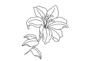 Lily One Line Flower Single Flowers & Plants Embroidery Design By Canada Crafts Studio