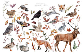 Autumn Forest Animals Watercolor PNG - 2