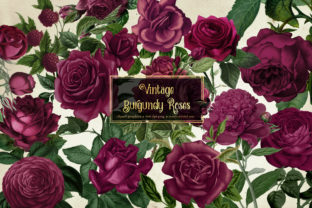 Print on Demand: Vintage Burgundy Roses Clipart Graphic Illustrations By Digital Curio 1