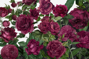 Print on Demand: Vintage Burgundy Roses Clipart Graphic Illustrations By Digital Curio 2