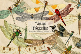 Print on Demand: Vintage Dragonfly Clipart Graphic Illustrations By Digital Curio