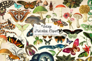 Print on Demand: Vintage Naturalist Clipart Graphic Illustrations By Digital Curio