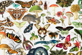 Print on Demand: Vintage Naturalist Clipart Graphic Illustrations By Digital Curio 2