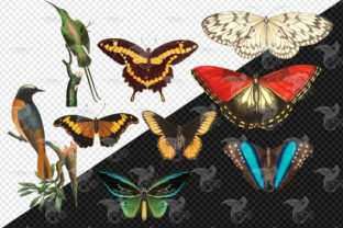 Print on Demand: Vintage Naturalist Clipart Graphic Illustrations By Digital Curio 3