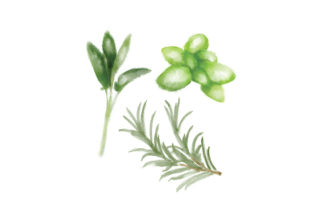 Watercolor Herbs Food & Drinks Craft Cut File By Creative Fabrica Crafts