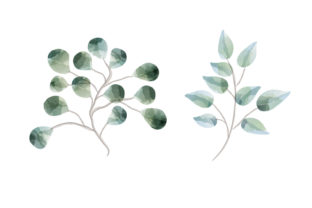 Print on Demand: Watercolor Leaves Illustration Graphic Illustrations By craftshop