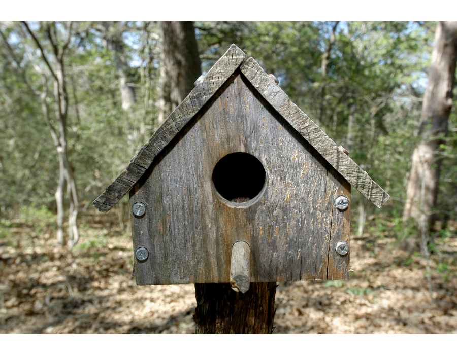 Wooden birdhouse mounted in tree