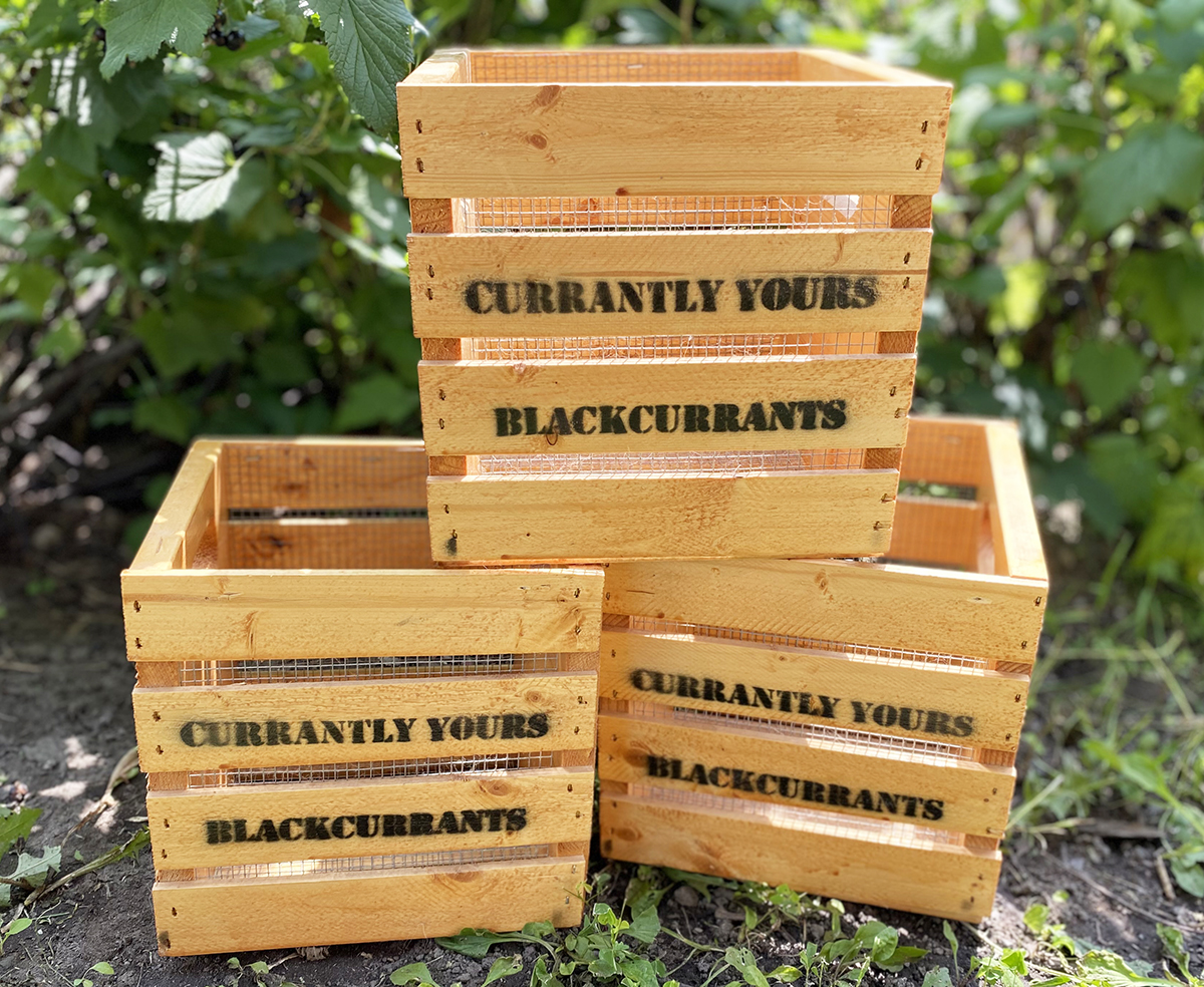 Finished harvest crates in garden