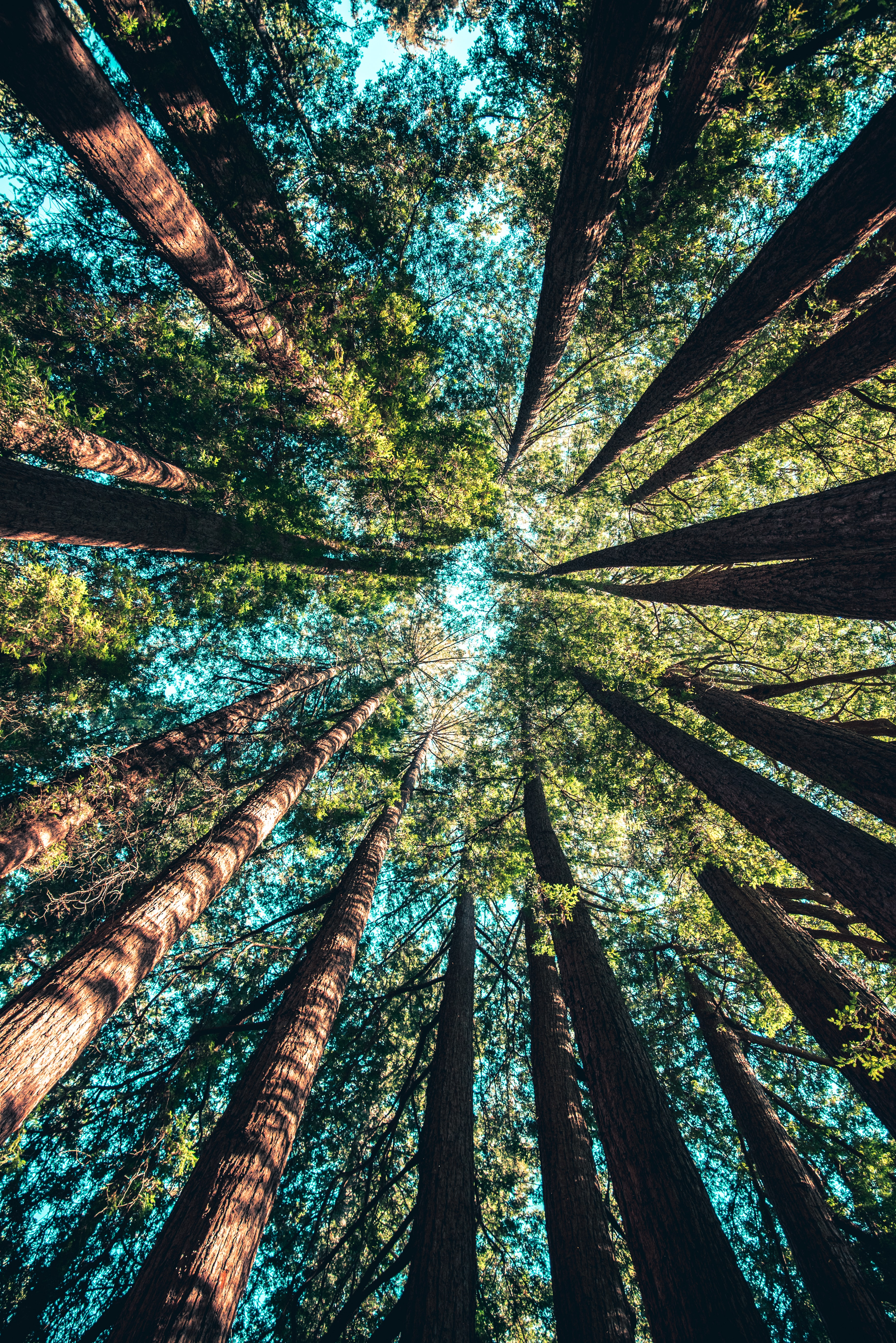 A harmonious group of trees that work together to complete a picture of its own